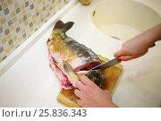 Купить «Woman cuts big raw fish with knife on board in kitchen, close up», фото № 25836343, снято 12 февраля 2016 г. (c) Losevsky Pavel / Фотобанк Лори