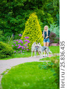 Купить «Young blond woman with two Husky dogs on dog-leads walks in summer park», фото № 25836435, снято 23 июля 2015 г. (c) Losevsky Pavel / Фотобанк Лори