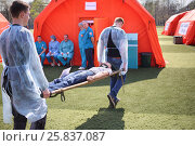Купить «MOSCOW - APR 28, 2015: Young medics transferred the injured man on a stretcher during a training exercise at a field hospital on the Burevestnik stadium», фото № 25837087, снято 28 апреля 2015 г. (c) Losevsky Pavel / Фотобанк Лори