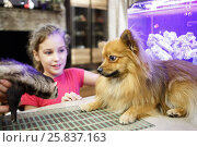 Купить «Girl watching acquaintance of a ferret And Dog», фото № 25837163, снято 23 октября 2014 г. (c) Losevsky Pavel / Фотобанк Лори