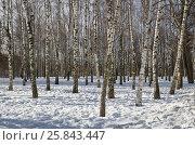 Купить «Зимний пейзаж с березами в парке», эксклюзивное фото № 25843447, снято 16 февраля 2017 г. (c) Елена Коромыслова / Фотобанк Лори