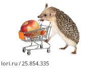 Купить «African hedgehog with apple», фото № 25854335, снято 27 марта 2017 г. (c) Алексей Кузнецов / Фотобанк Лори
