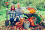 couple with harvested vegetables in garden, фото № 25854591, снято 12 сентября 2012 г. (c) Яков Филимонов / Фотобанк Лори
