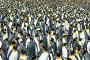 King penguins colony at South Georgia, фото № 25874391, снято 25 января 2007 г. (c) Vladimir / Фотобанк Лори