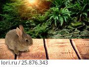 Купить «Composite image of close-up of brown easter bunny», фото № 25876343, снято 9 декабря 2018 г. (c) Wavebreak Media / Фотобанк Лори