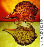 Купить «Стеклянный еж», фото № 25882995, снято 4 апреля 2020 г. (c) Владимир Попков / Фотобанк Лори