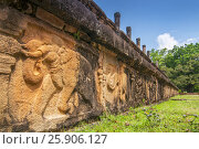 Купить «Carved in stone elephants on the Council Chamber in the world heritage city Polonnaruwa, Sri Lanka», фото № 25906127, снято 23 июля 2019 г. (c) BE&W Photo / Фотобанк Лори