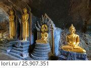 Купить «Golden statue of Reclining Buddha in buddhist cave temple in Wat Tham Suwankhuha cave (Monkey Cave) In Phang Nga, Thailand», фото № 25907351, снято 26 марта 2019 г. (c) BE&W Photo / Фотобанк Лори