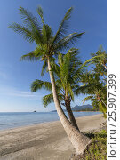 Купить «Beachside with coconut tree, Koh Chang, Thailand», фото № 25907399, снято 24 мая 2018 г. (c) BE&W Photo / Фотобанк Лори