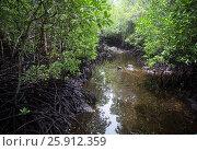 Мангровый лес (2017 год). Стоковое фото, фотограф Ольга Коркина / Фотобанк Лори