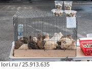 Перепела на зоорынке. Стоковое фото, фотограф Игорь Новиков / Фотобанк Лори