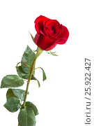 Image with a red rose. Стоковое фото, фотограф Ирина Толокновская / Фотобанк Лори