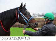 Лошадь и наездник (2017 год). Редакционное фото, фотограф Карданов Олег / Фотобанк Лори