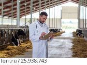 Купить «veterinarian with cows in cowshed on dairy farm», фото № 25938743, снято 12 августа 2016 г. (c) Syda Productions / Фотобанк Лори