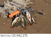 Купить «Ловля окуня спиннингом», фото № 25942275, снято 26 сентября 2014 г. (c) Юрий Фатеев / Фотобанк Лори
