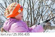 Маленькая девочка помогает обрезать куст вербы садовыми ножницами. Стоковое фото, фотограф Юлия Мальцева / Фотобанк Лори