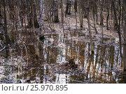 Купить «Смешанный лес весной», фото № 25970895, снято 6 апреля 2017 г. (c) Алёшина Оксана / Фотобанк Лори