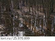 Купить «Смешанный лес весной», фото № 25970899, снято 6 апреля 2017 г. (c) Алёшина Оксана / Фотобанк Лори
