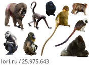 Купить «collection of different monkeys», фото № 25975643, снято 23 апреля 2019 г. (c) Яков Филимонов / Фотобанк Лори