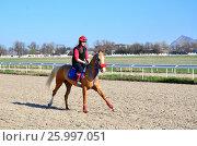 Наездница верхом на лошади (2017 год). Редакционное фото, фотограф Карданов Олег / Фотобанк Лори