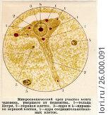 Купить «Микроскопический срез участка мозга человека, умершего от бешенства», иллюстрация № 26000091 (c) Макаров Алексей / Фотобанк Лори