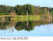 Купить «Evening summer lake landscape.», фото № 26016051, снято 9 августа 2016 г. (c) Юрий Брыкайло / Фотобанк Лори