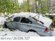 Обильный снегопад весной валит деревья в Молдавии,город Кишинёв. Стоковое фото, фотограф Вячеслав Сыпченко / Фотобанк Лори