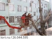 Мужчины спиливают большие ветки (2016 год). Редакционное фото, фотограф Kostin sergey aleksandrovich / Фотобанк Лори