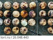 Перепелиные яйца на деревянном фоне. Стоковое фото, фотограф Виталий Федоров / Фотобанк Лори