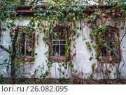 Купить «Overgrown cottage in Krasne, one of abandoned villages of Chernobyl Nuclear Power Plant Zone of Alienation around nuclear reactor disaster, Ukraine.», фото № 26082095, снято 17 сентября 2016 г. (c) easy Fotostock / Фотобанк Лори