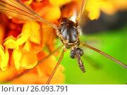 Купить «Жуки готовы к полету», фото № 26093791, снято 7 августа 2012 г. (c) Geraldas Galinauskas / Фотобанк Лори