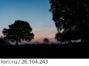 Купить «Dawn», фото № 26104243, снято 25 июня 2019 г. (c) easy Fotostock / Фотобанк Лори
