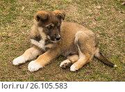 Pet dog on background of the green herb. Стоковое фото, фотограф Сергей Овчинников / Фотобанк Лори