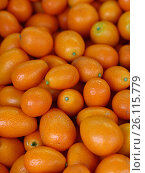 Купить «Fresh orange cumquat citrus fruits», фото № 26115779, снято 24 марта 2017 г. (c) Anton Eine / Фотобанк Лори