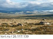 Тундра летом. Норвегия, фото № 26117139, снято 10 августа 2011 г. (c) Юлия Бабкина / Фотобанк Лори