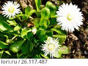 Купить «Красивый цветок на фоне природы», фото № 26117487, снято 19 марта 2014 г. (c) Сергеев Валерий / Фотобанк Лори