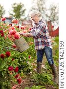 senior woman watering flowers at summer garden. Стоковое фото, фотограф Syda Productions / Фотобанк Лори