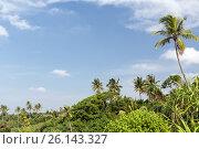 Купить «forest landscape on sri lanka», фото № 26143327, снято 19 февраля 2016 г. (c) Syda Productions / Фотобанк Лори