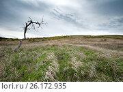 Купить «Донские меловые горы в Донском природном парке», фото № 26172935, снято 30 апреля 2017 г. (c) Матвей Солодовников / Фотобанк Лори