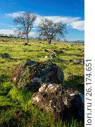 Купить «Oak woodland, Sacramento River Bend Area of Critical Environmental Concern, Paynes Creek Wildlife Area, California.», фото № 26174651, снято 22 февраля 2017 г. (c) age Fotostock / Фотобанк Лори