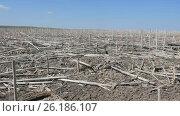 Купить «Ecology. Spring unplowed field with dry stems left after last year's harvesting of sunflower.», видеоролик № 26186107, снято 19 сентября 2018 г. (c) Константин Мерцалов / Фотобанк Лори