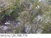 Купить «Снегопад в Москве 8 мая 2017 года», фото № 26188715, снято 8 мая 2017 г. (c) Евгений Лихолатов / Фотобанк Лори