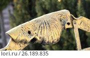 Декорирование металлической скамейки под золото. Стоковое видео, видеограф Вячеслав Сыпченко / Фотобанк Лори