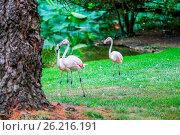 Купить «The three beautiful pink flamingo», фото № 26216191, снято 25 июня 2019 г. (c) easy Fotostock / Фотобанк Лори