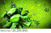 Купить «Microbiology. Microorganisms. Parasites and bacteria on a leaf of a young plant. Video and graphics. HD», видеоролик № 26295843, снято 1 сентября 2016 г. (c) ActionStore / Фотобанк Лори