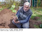 Купить «Посадка саженца винограда», фото № 26318319, снято 13 мая 2017 г. (c) Акиньшин Владимир / Фотобанк Лори