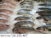 Купить «Row fish», фото № 26335467, снято 13 февраля 2017 г. (c) Евгений Дробитько / Фотобанк Лори