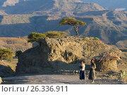 Эфиопия (2016 год). Редакционное фото, фотограф Минаева Вера / Фотобанк Лори