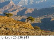 Эфиопия. Закат. Стоковое фото, фотограф Минаева Вера / Фотобанк Лори