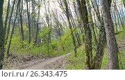 Купить «POV camera goes along a forest path. The dried leaves of last year. Fresh spring greens, underbrush, shrub, parkland», видеоролик № 26343475, снято 21 мая 2017 г. (c) Ольга Балынская / Фотобанк Лори